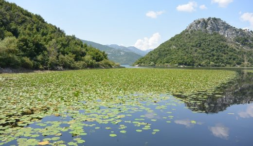 Skadar Lake withOut chemicaL pollUTION – SOLUTION